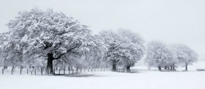 2nd-Winter-Trees-Lesley-Smith